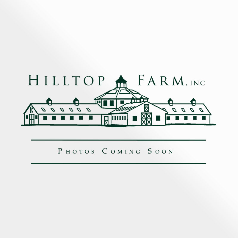 hilltop-photos-coming-soon-logo
