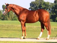 stallion_qredit-rect