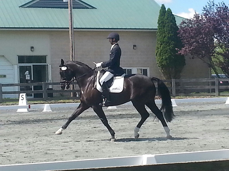 Maryland Dressage Show
