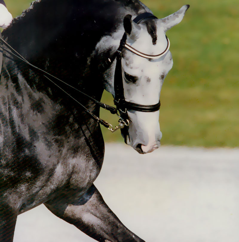 Riverman is the Top-Ranking, US-based Show Jumping Sire