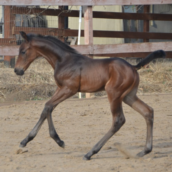 (Royal Prince x Lady Rubina/Lord Liberty G)