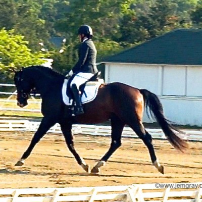 "Royal Tourmalet SPF - Royal Prince x Armin - ""Artie"" 2011 Hanoverian Stallion  LIDCTA Summer Dressage III & IV Old Field Farm, Setauket, New York  August 29th & 30th, 2015"