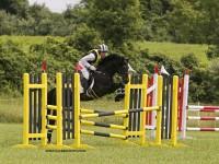 005-popeye-stallion-hilltop-farm