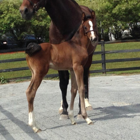 ster_2015filly4_quilana_myers-web