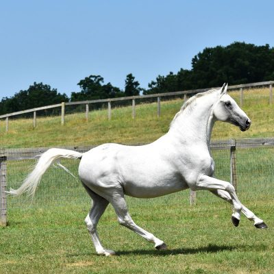 news_riverman-eventing-sire
