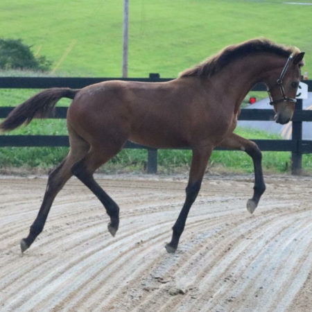 olivi_notorious_2018filly-3_web-800-x800