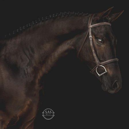 popeye_poseiden3_khemossaffyre_o_b_mikemaloney_photo-sas-equine-photography_square
